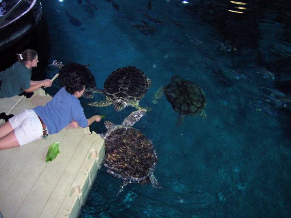 Large salt water aquarium